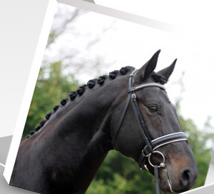 Best Equestrian Gift | Canvas Horse Portraits