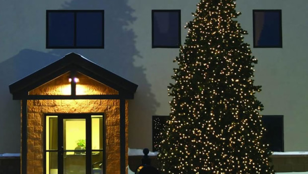Commercial Christmas Trees