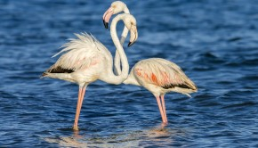 pink flamingo couple