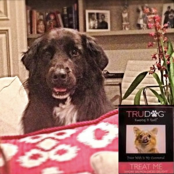 Tiger Lily with TruDog Treat Me Treats